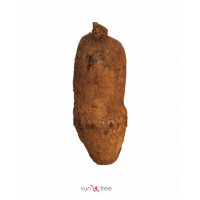 A Tuber of Yam